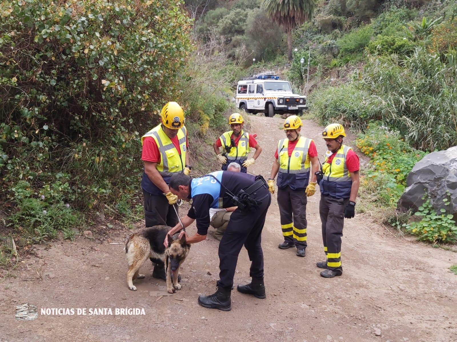 Policía Local y Giors rescatan a una perra herida en Santa Brígida