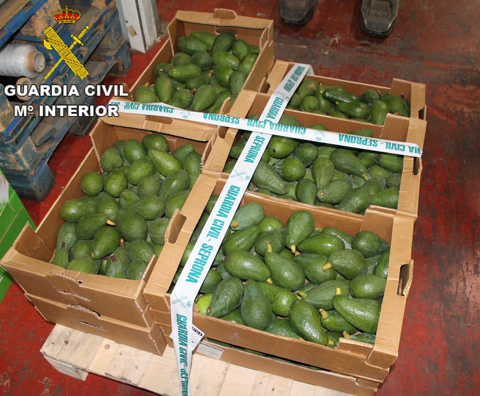 Detenidos por robar en dos fincas agrícolas de Santa Brígida