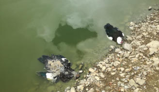 Una bacteria causó la muerte de los patos del Llano de María Rivera